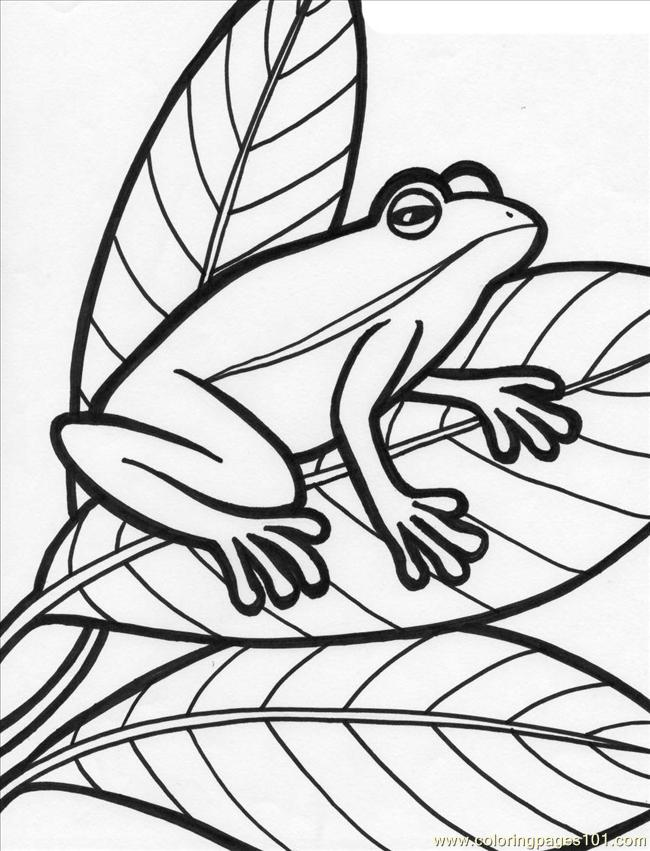 Frog%2b18 Coloring Page