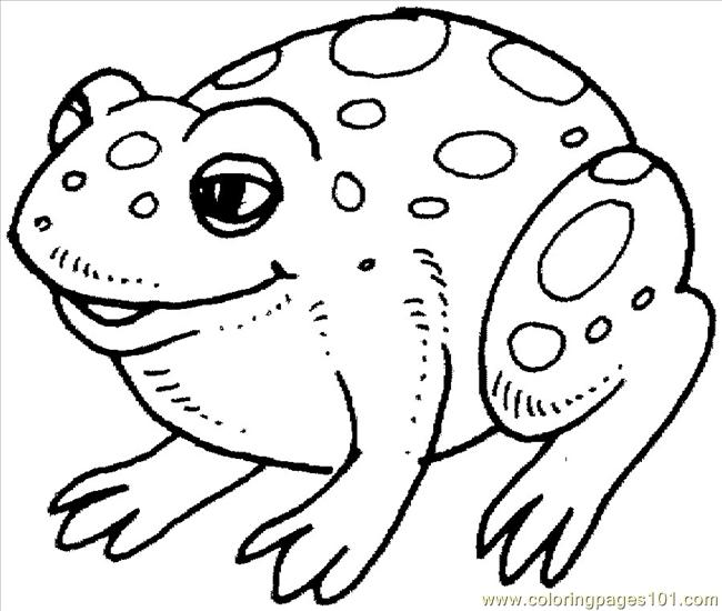 printable coloring pages of rainforest animals - Printable Coloring Pages Frogs
