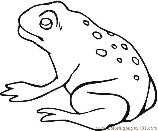 Frog (4) Coloring Page