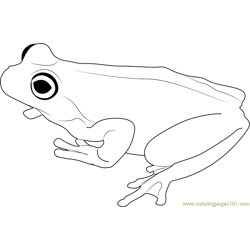 Brown Tree Frog Free Coloring Page for Kids
