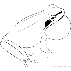 Eastern Sedge Frog Free Coloring Page for Kids