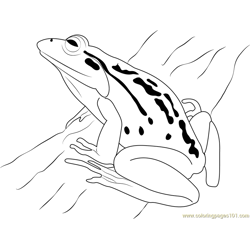 Frog Free Coloring Page for Kids