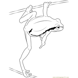Green Frog Jump Free Coloring Page for Kids