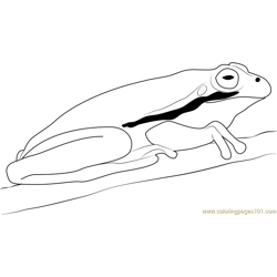 Green Tree Frog Relaxing Free Coloring Page for Kids