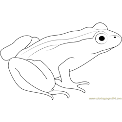White Frog Free Coloring Page for Kids
