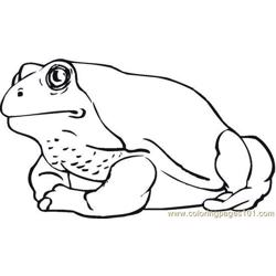Frog (11)