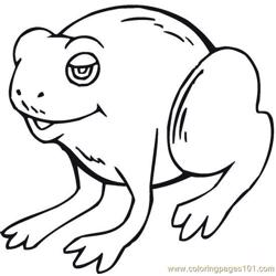 Frog (3)
