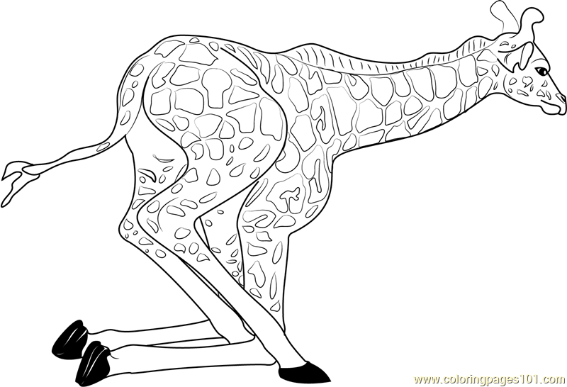 Baby Giraffe Getting Up Coloring Page