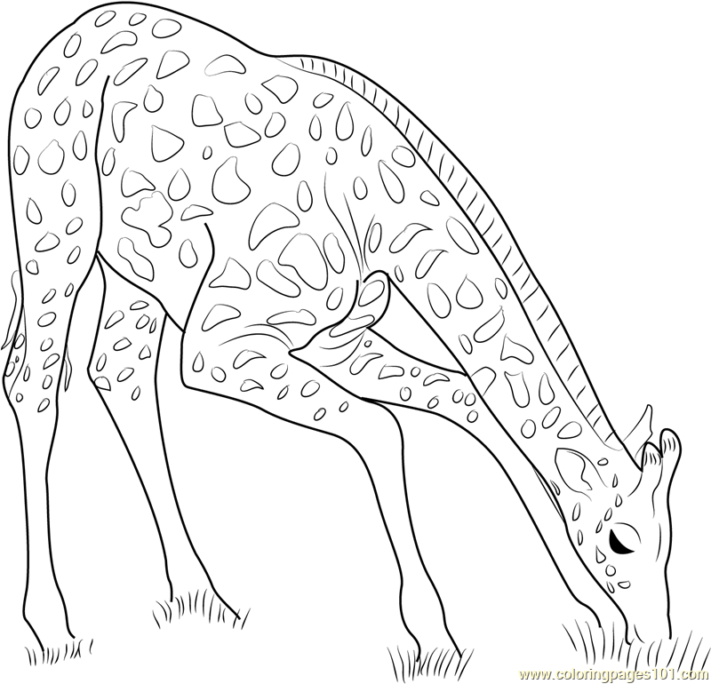 Inspirational Giraffe Coloring Pages 82 About Remodel