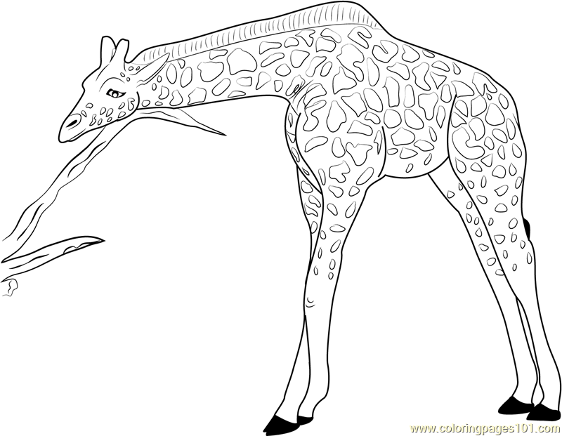 giraffe relaxing coloring page