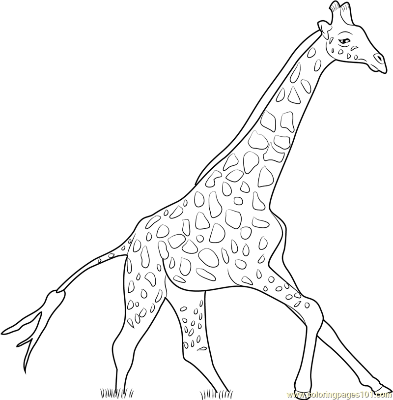 Giraffe Running Coloring Page