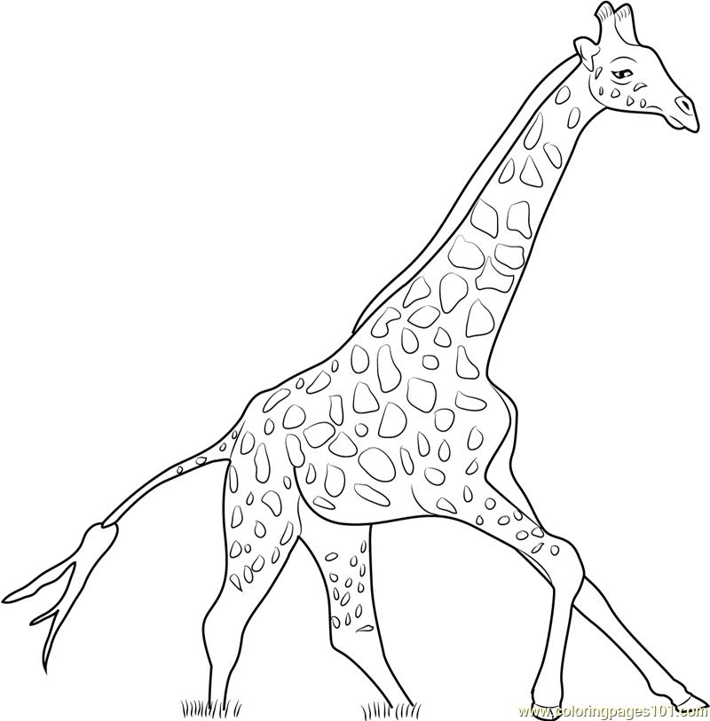 Giraffe Running Coloring Page Free Giraffe Coloring