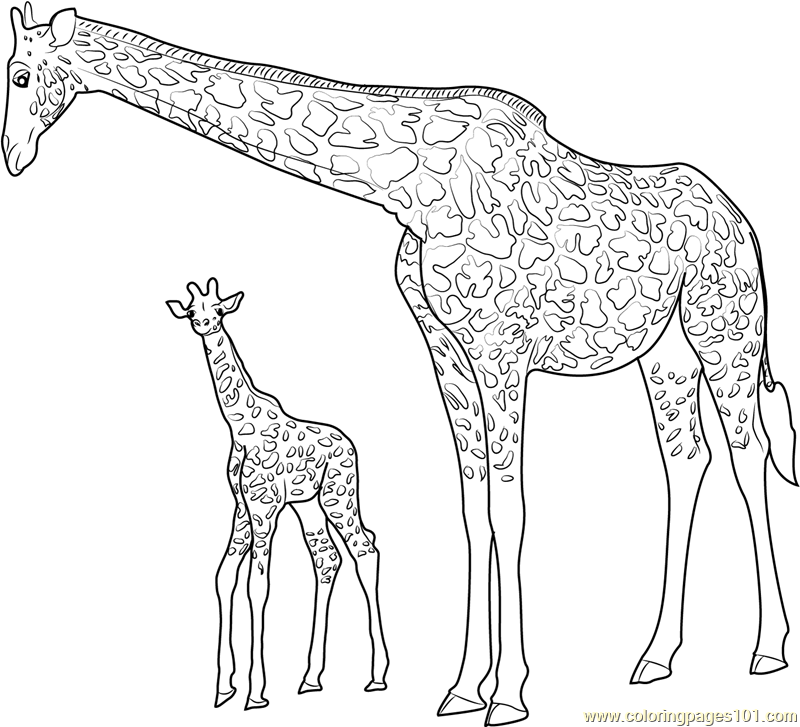 Giraffe With Baby Coloring Page