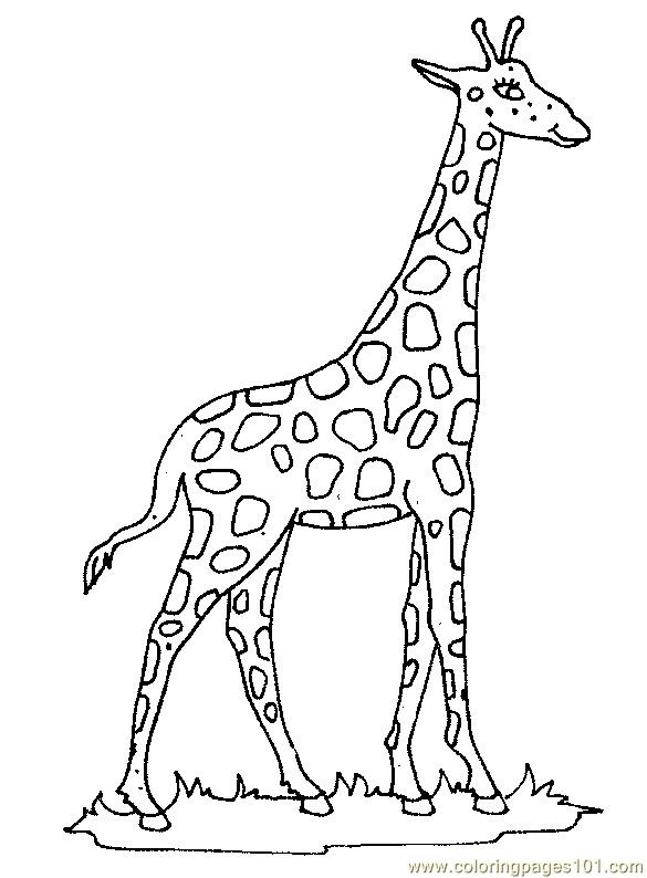 giraffe 22 coloring page