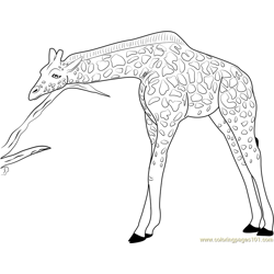 Giraffe Relaxing Free Coloring Page for Kids