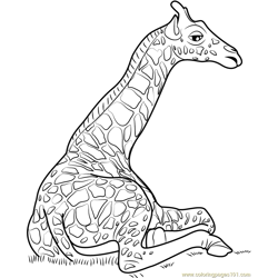 Giraffe Sitting Free Coloring Page for Kids