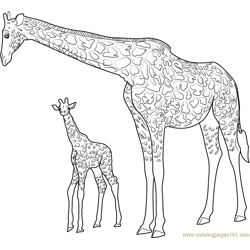 Giraffe with Baby Free Coloring Page for Kids