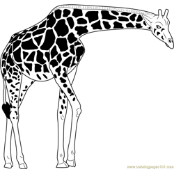 Masai Giraffe Free Coloring Page for Kids