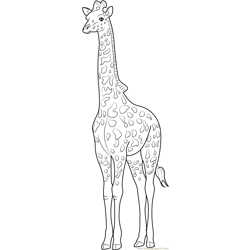 The Tallest Animal Giraffe Free Coloring Page for Kids