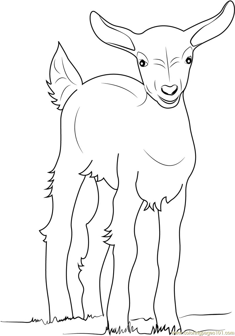 baby goat coloring page - Coloring Page Goat