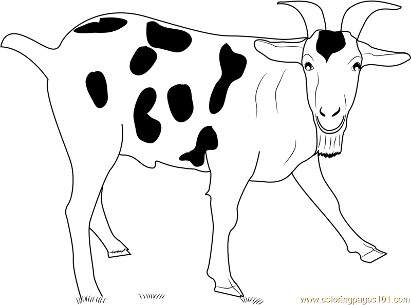 Black Spotted Goat Coloring Page Free Goat Coloring Pages