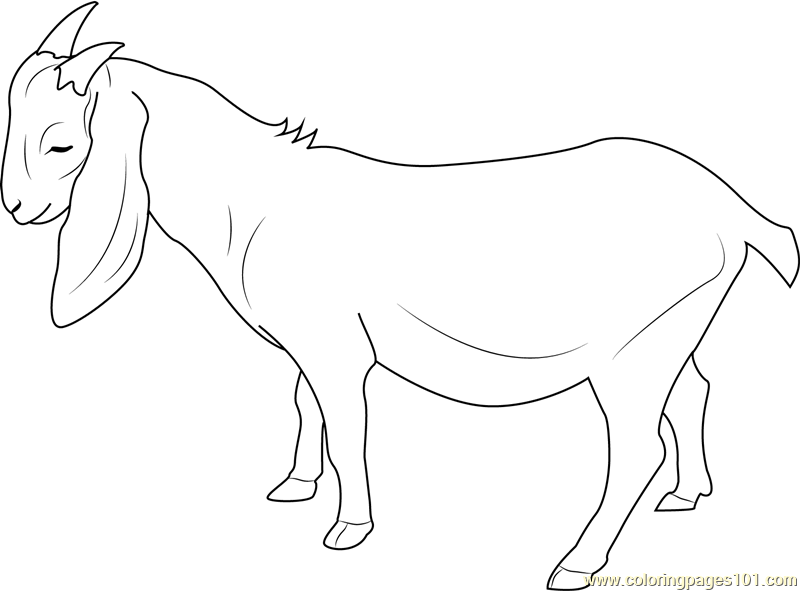 Free Coloring Pages Of G Is For Goat