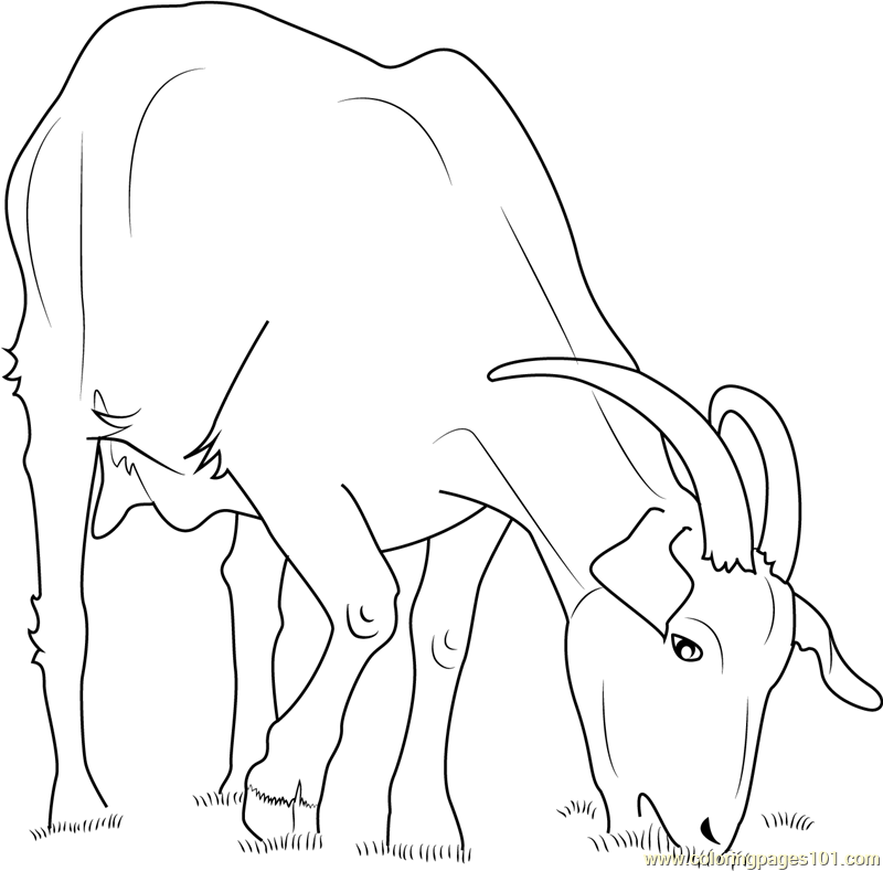Domestic Goat Coloring Page Free