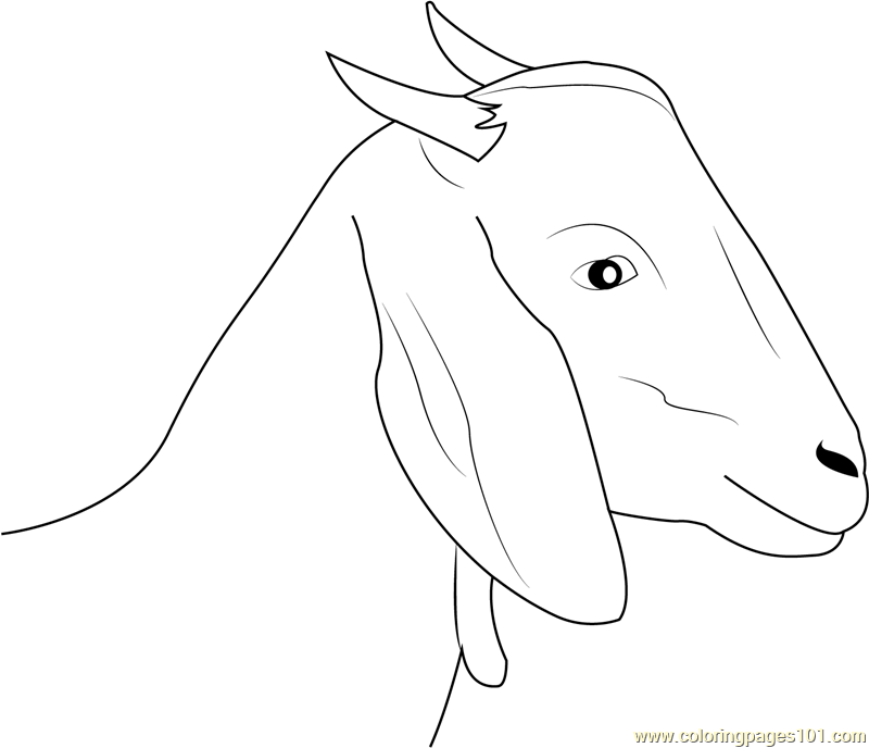Goat Face Coloring Page For Kids - Free Goat Printable Coloring Pages  Online For Kids - ColoringPages101.com Coloring Pages For Kids
