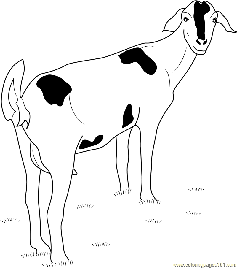Goat Looking Back Coloring Page