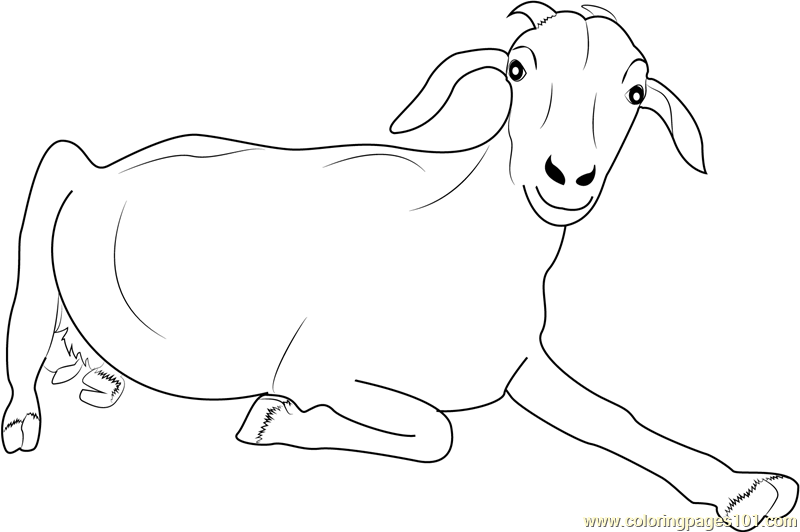 Goat Looking at You Coloring Page