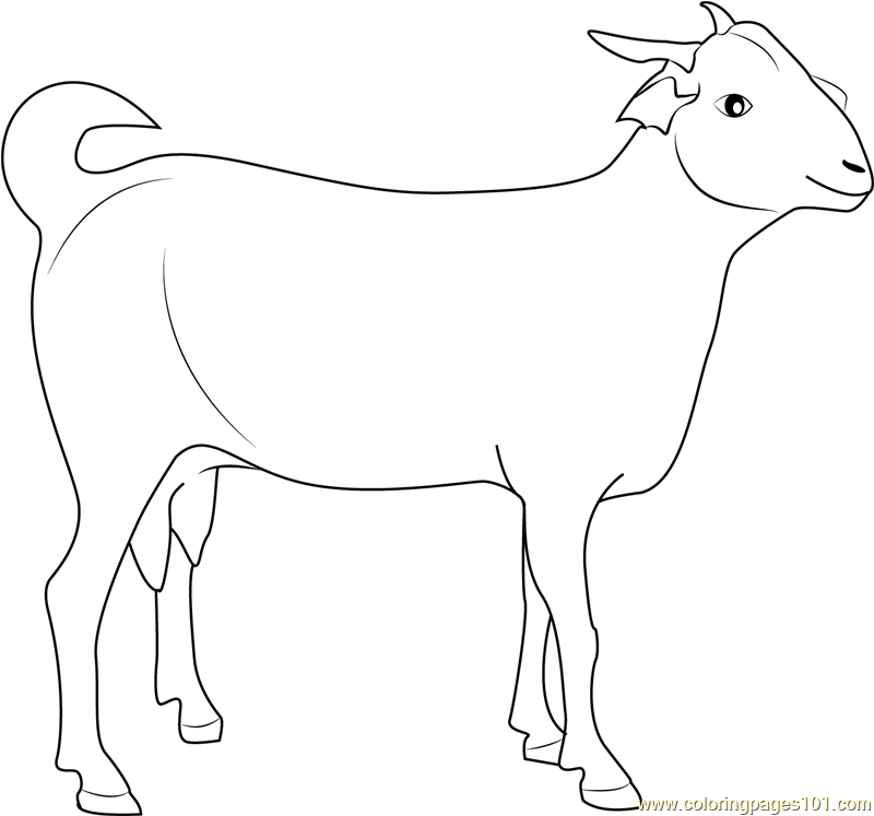 Indian Goat Coloring Page Free