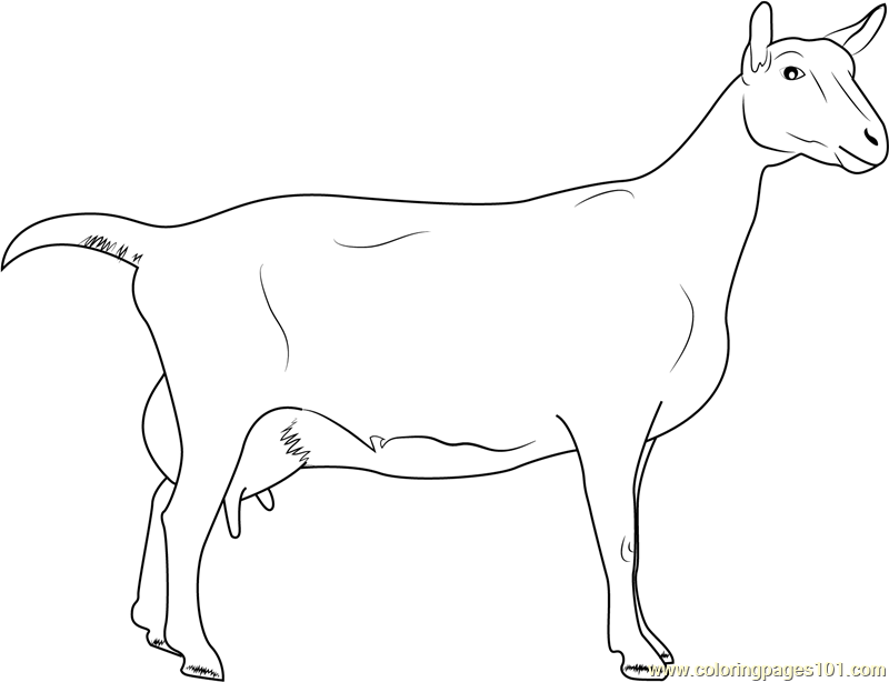 Saanen Breeds of Goat Coloring Page
