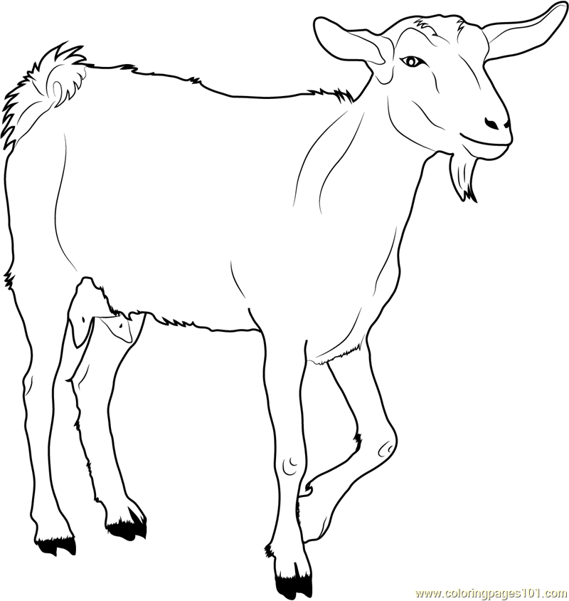 White Goat Coloring Page Free Goat Coloring Pages