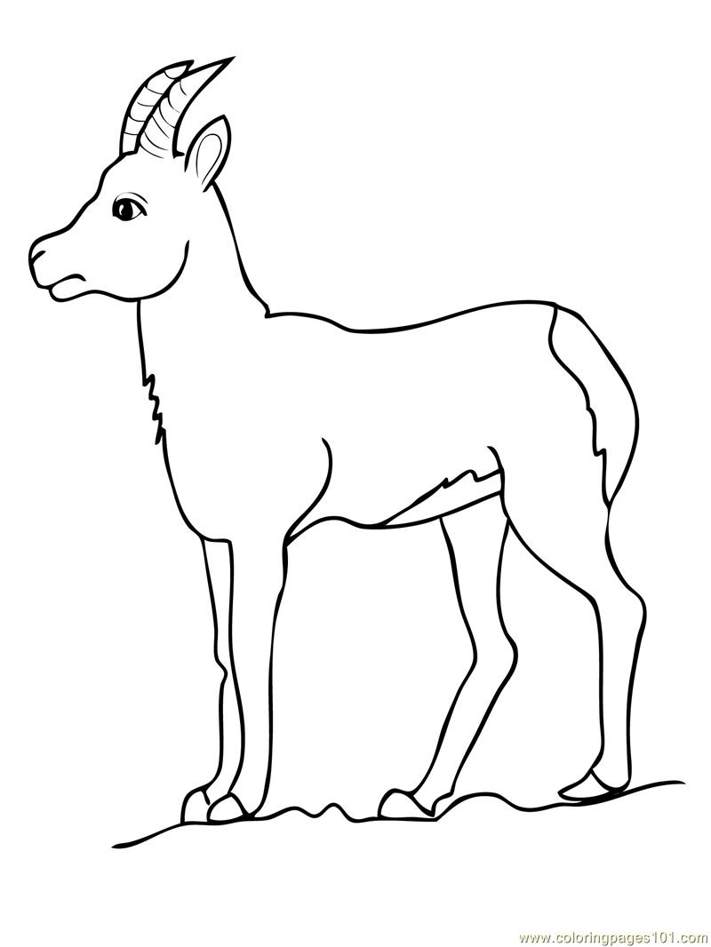 Chamois goat antelope Coloring Page Free Goat Coloring Pages