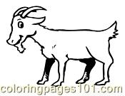 Goat Coloring Page 05 Coloring Page