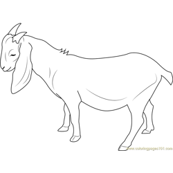 Charlie Goat coloring page