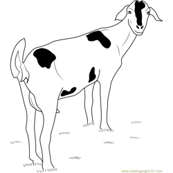 Goat Looking Back Free Coloring Page for Kids