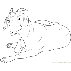 Goat Relaxing Free Coloring Page for Kids