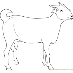 Indian Goat Free Coloring Page for Kids