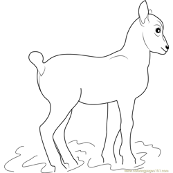 Little Goat Free Coloring Page for Kids
