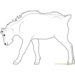 Mountain Goat Kid Free Coloring Page for Kids