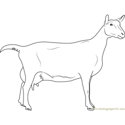 Saanen Breeds of Goat Free Coloring Page for Kids