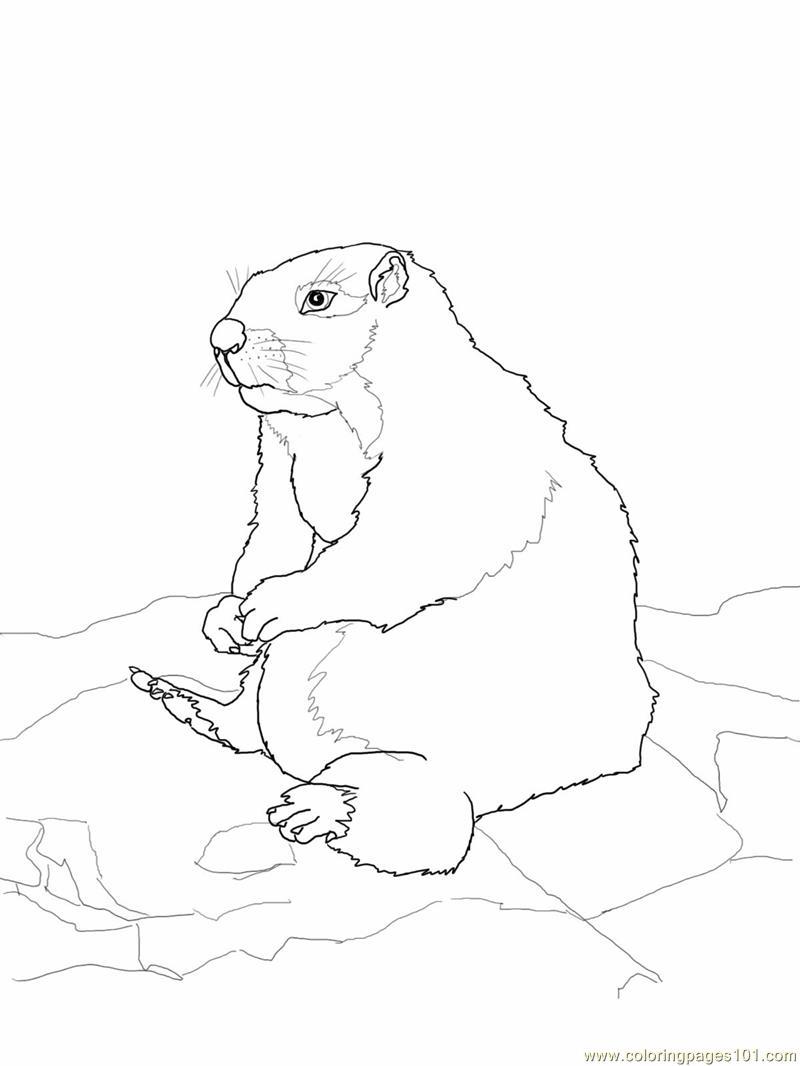 Sitting gopher or Prairie Dog Coloring Page - Free Gopher or Prairie ...