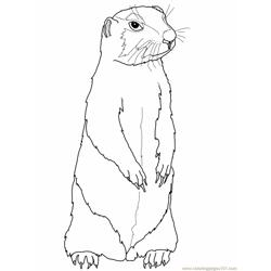 Prairie Gopher or Prairie Dog Free Coloring Page for Kids