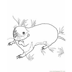 Pocket gopher Free Coloring Page for Kids