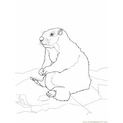 Sitting gopher or Prairie Dog Free Coloring Page for Kids