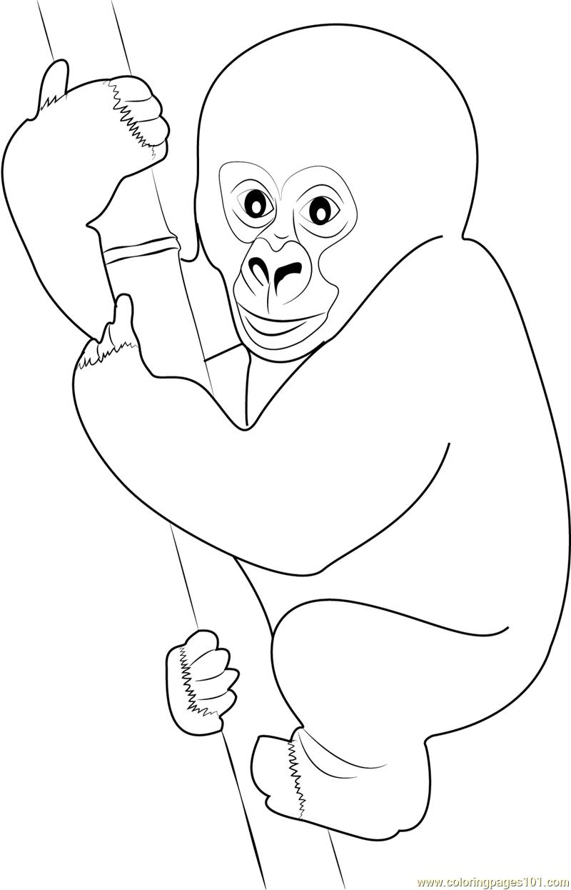 Cute Gorilla Baby Coloring Page Free Gorilla Coloring