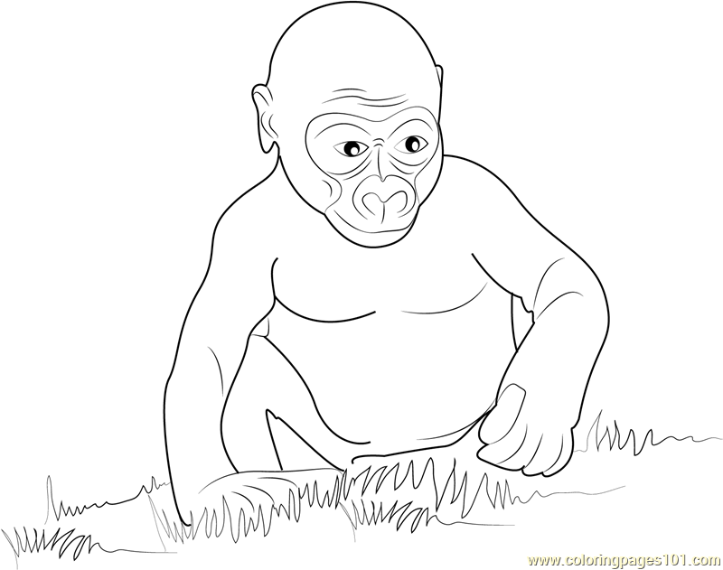 Baby Gorilla Coloring Pages Pictures To Pin On Pinterest