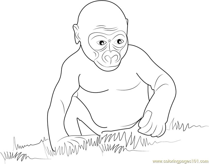 Gorilla Baby Coloring Page