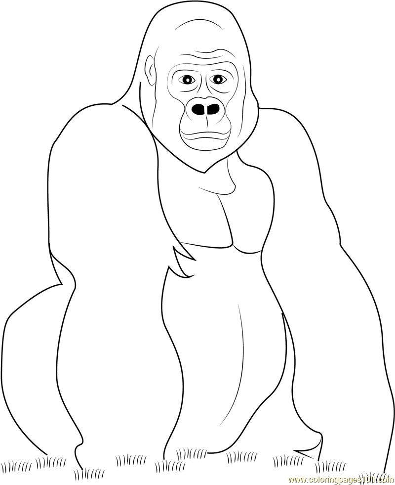 Gorilla Look at You Coloring Page Free Gorilla Coloring Pages